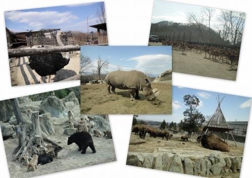 サファリパーク動物園
